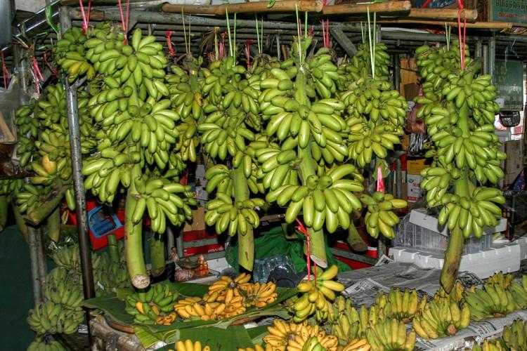 Lots of bananas
