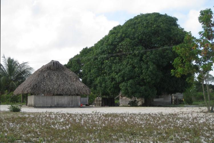 Huis onder de mangoboom