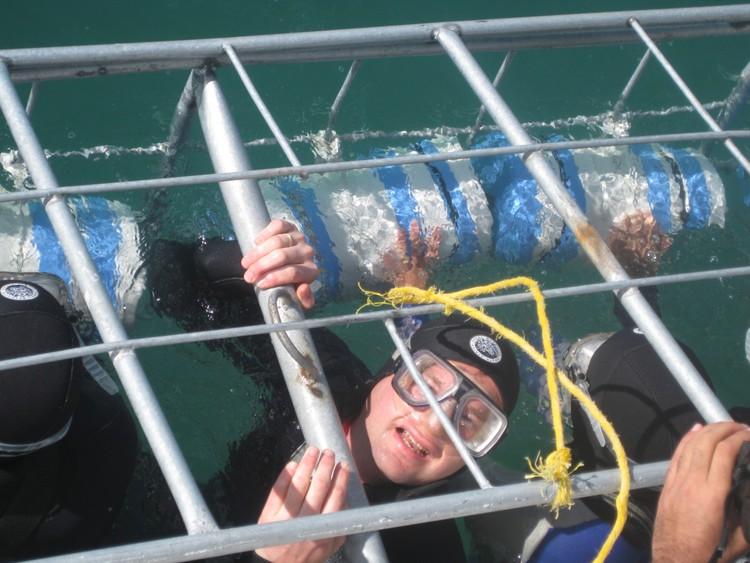 Cage diving (koud!)